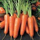 Гидролат  Моркови
