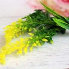 Мимоза цветочки
