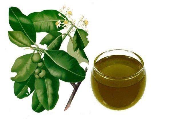 maslo-tamanualeksandriyskogo-lavra-tamanu-oil-49-1