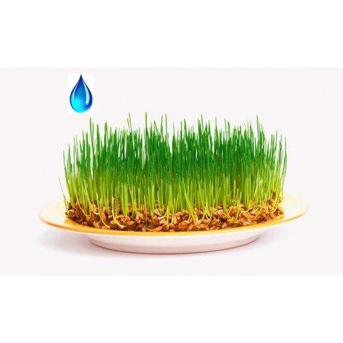 ВРМ Зародышей пшеницы