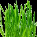 Свежескошенная трава отдушка