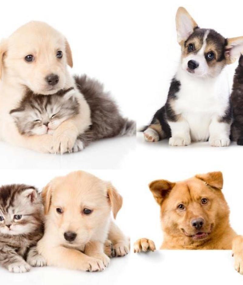 """Водорастворимая бумага """"Котики и собачки"""""""