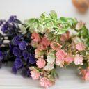 Гипсофила цветочки