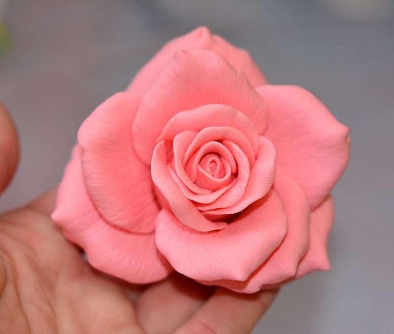 Роза Stars