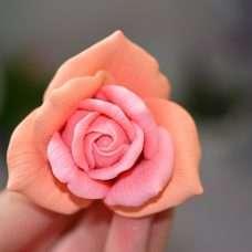 Роза Stars малая
